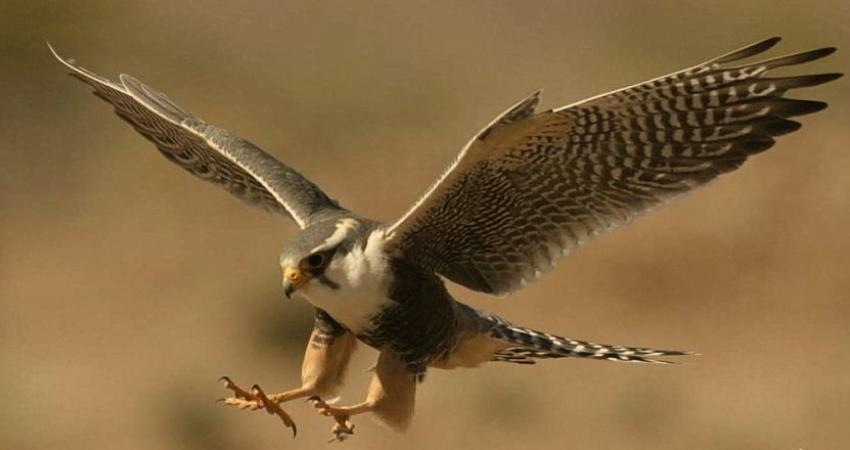 ممنوعیت صدور پروانه عادی شکار پرندگان وحشی در تهران