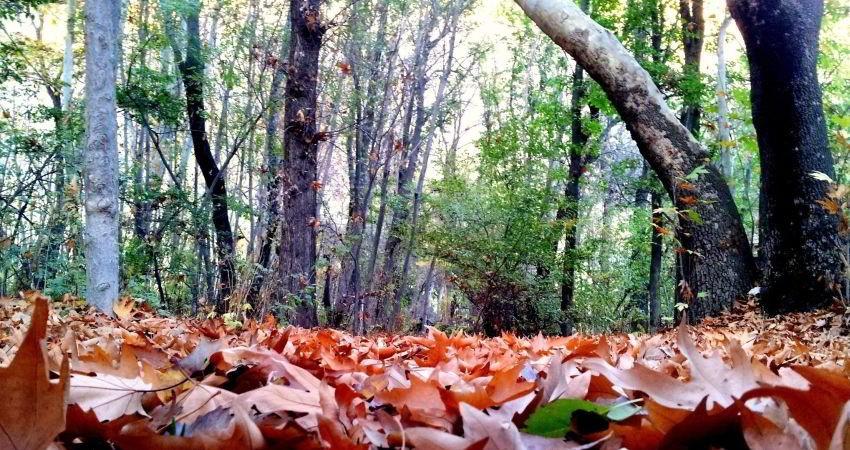 بررسی مقررات گردشگری در پارک ها و منابع طبیعی