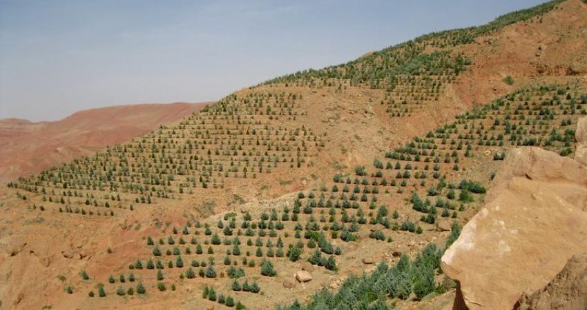 جنگل کاری مشارکتی، بهبود معیشت جوامع روستایی را در پی دارد