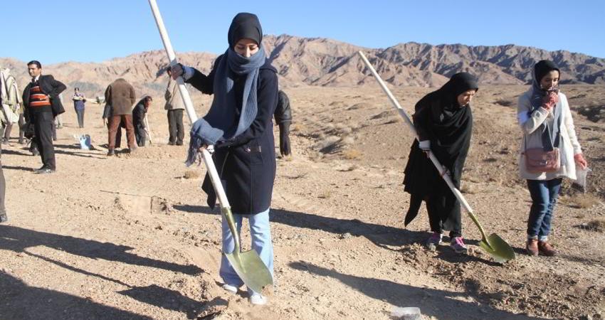 بذر بلوط در 30 هکتار اراضی جنگلی مهدیشهر کاشته شد