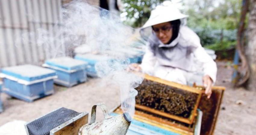 گسترش اقتصاد سبز به همت زنان کارآفرین