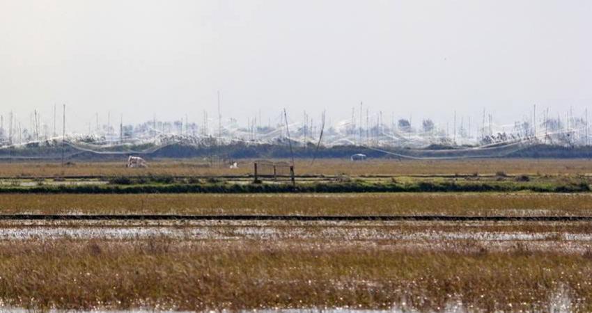 دام های هوایی در فریدونکنار جمع آوری شدند