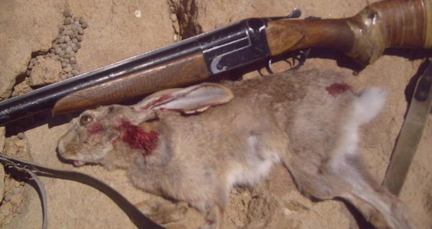 شکار غیر قانونی خرگوش ها در لرستان